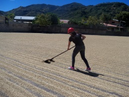 Maricruz raking coffee beans